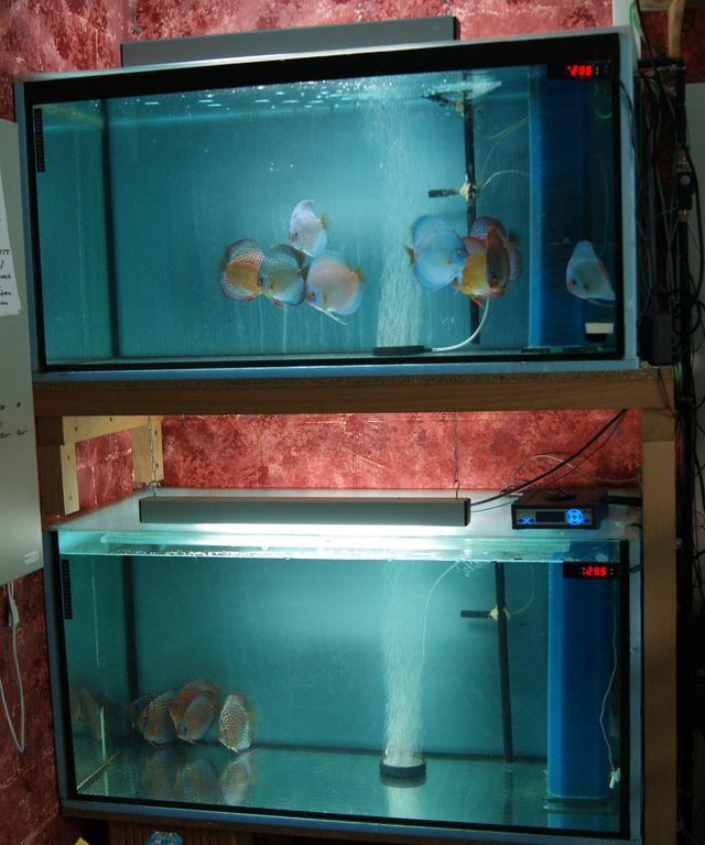 lichtcomputer für aquarien